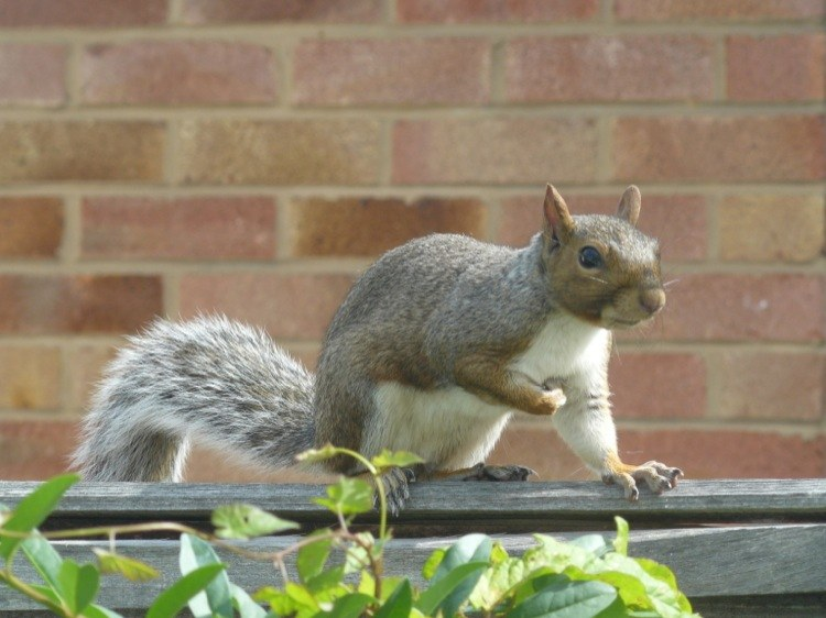 How to keep squirrels from your home forever!